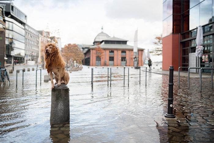 dog-turned-into-lion-julia-marie-werner-16.jpg