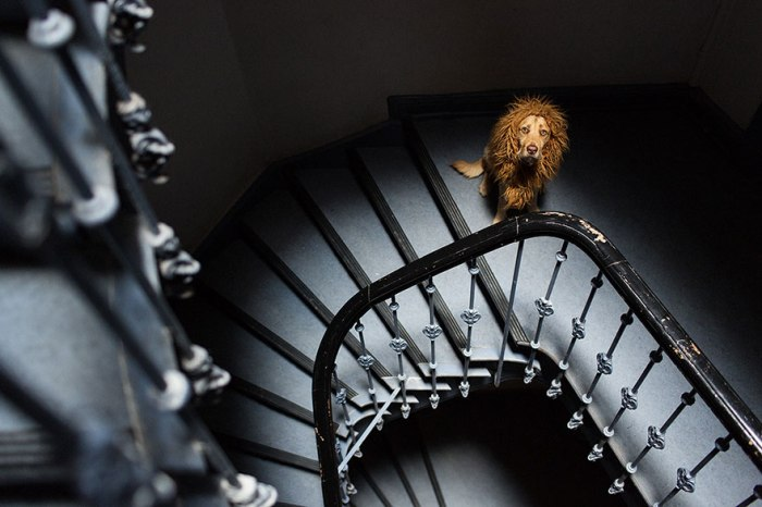 stray-dog-big-city-lion-grossstadtlowe-julia-marie-werner-25.jpg