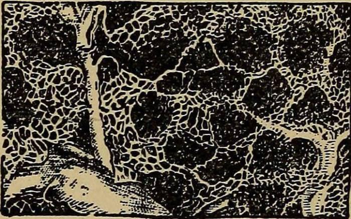 your-cells-burst-photo-u2.jpg