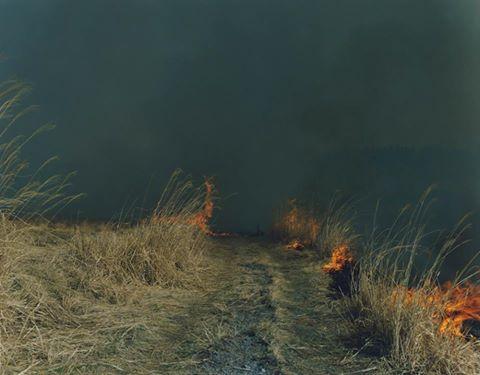 Rinko Kawauchi- -Untitled- from series -Ametsuchi-- 2012.jpg